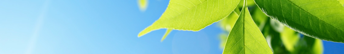 sunny background image